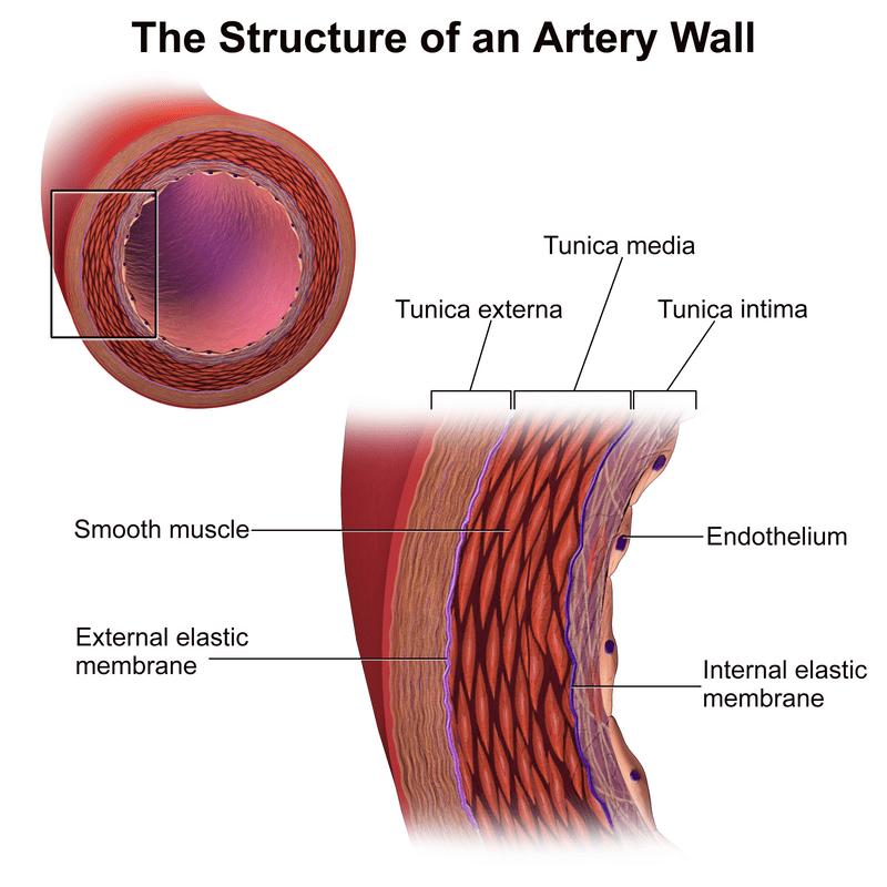 An artery