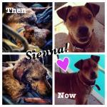 Sienna, then & now