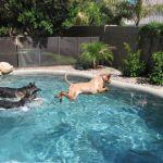 Bentley loves to swim!