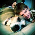 Jessie, Boxer-Shepherd mix - Medical Animals In Need (34)