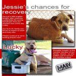 Jessie, Boxer-Shepherd mix - Medical Animals In Need (36)
