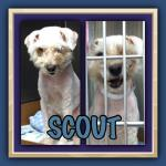 Scout: Dog Rescue in Phoenix Arizona