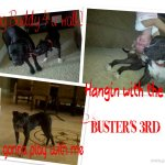 Buster in foster