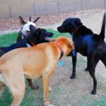 Pack Play! Ruby, ,Butch and Ebony