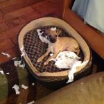Ringo's Dog Shaming pic
