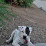 Lola is getting so big!