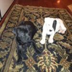 Ravyn & Lola