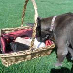 Sasha checks on her pups