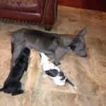 Sasha and pups April 28th