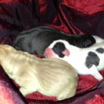 Our first litter