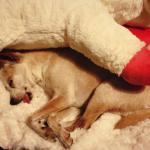 Chai's sleepy time