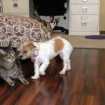 Madelyn meets the cats!