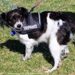 triPAWd Hope