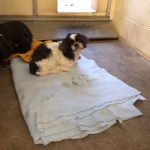 Nikki waiting to be rescued at county