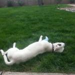 buddy lounging