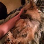 Alvin in foster