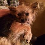 Alvin in foster4