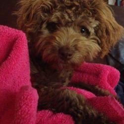 Millie in foster