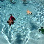 Millie swimming