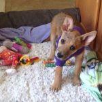 Jasper with his honey wrap on