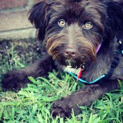 Gonzo, adoptable!