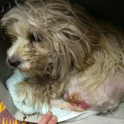 Gage after rescue