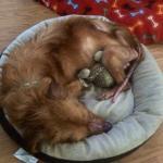 simon resting in foster