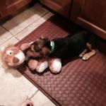 Farley, safe in foster