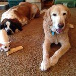 Kane, little dog big bone!
