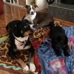 Alfie with his foster crew