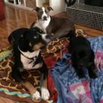 Alfie with his foster crew