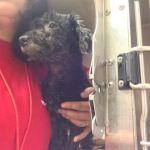 Gidget, rescued!