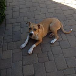 Otis all grown up