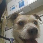 Baxter taking selfies at the vet!