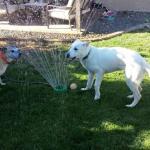 Luke playtime