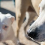 Tippen, Medical Animals In Need (M.A.I.N.)