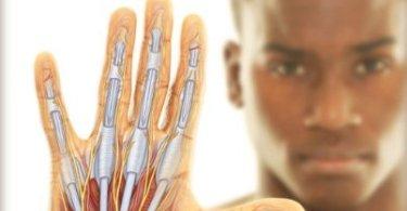 Human Anatomy 3rd Edition PDF