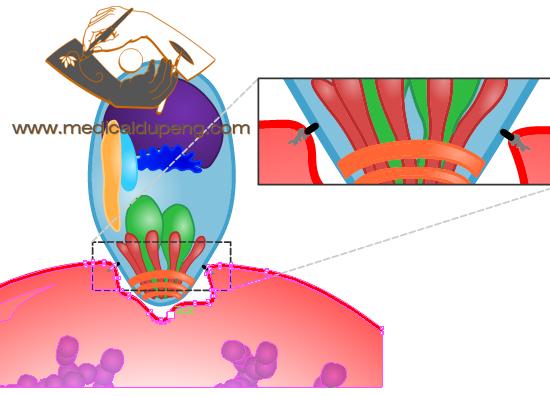 Parasite vector color illustration
