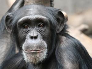 мозг, приматы