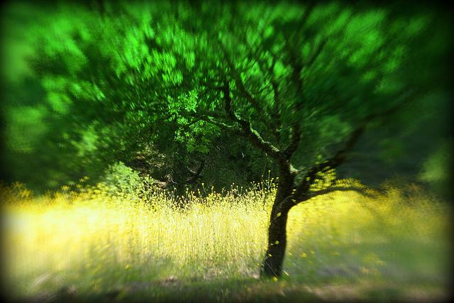 зеленые насаждения