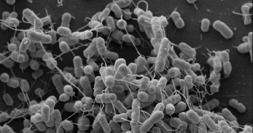 Бактерии создают нанотрубки, которые позволяют питать друг друга