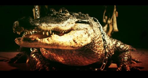Кровь аллигаторов имеет антибактериальные свойства