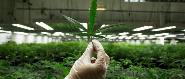 марихуана, биполярные расстройства, маниакальные и депрессивные симптомы