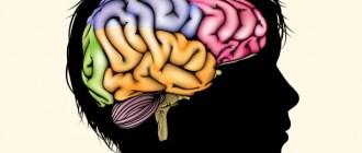 размер мозга, социально-экономические факторы