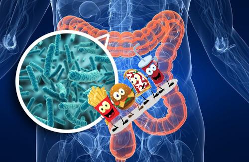 фаст-фуд, кишечные бактерии, микробиота