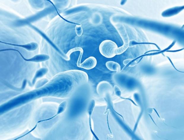 сперматозоиды, искусственная сперма