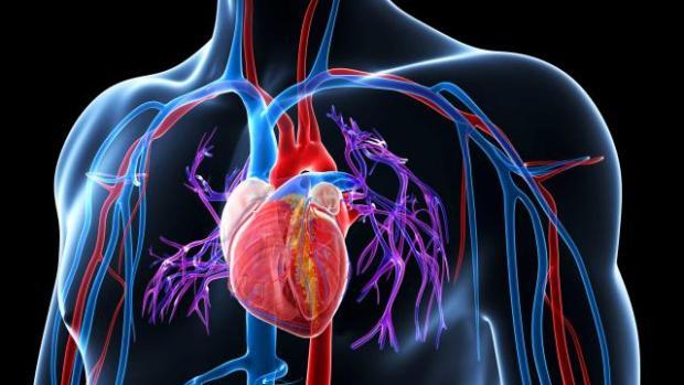 ревматоидный артрит, сердце
