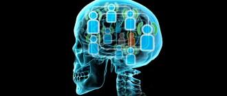 социальная память, головной мозг