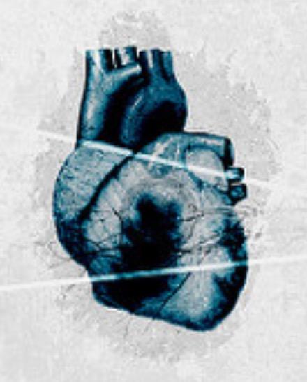 сердце, рак, сердечная мышца