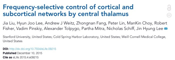 Liu J. et al. Frequency-selective control of cortical and subcortical networks by central thalamus //eLife. – 2015. – Т. 4. – С. e09215.